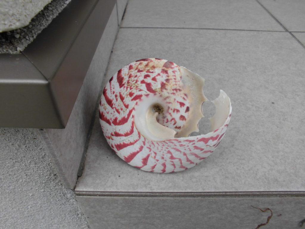 巻き貝の底面
